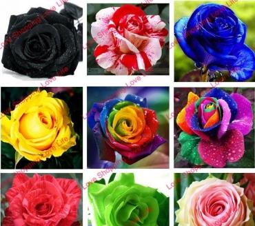 Роза асорти